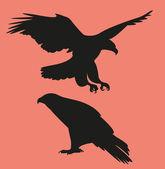 Falcon Ilustration