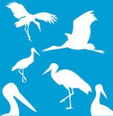 Ilustration of Stork