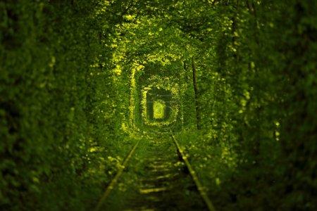 Photo pour Tunnel de l'amour en Ukraine - image libre de droit