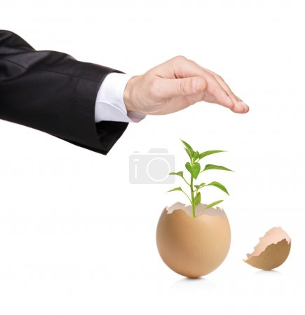 Hand protecting a green plant in eggshell