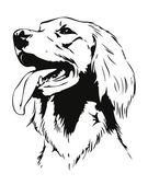 Irish setter dog head