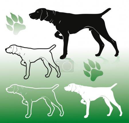 German pointer dog