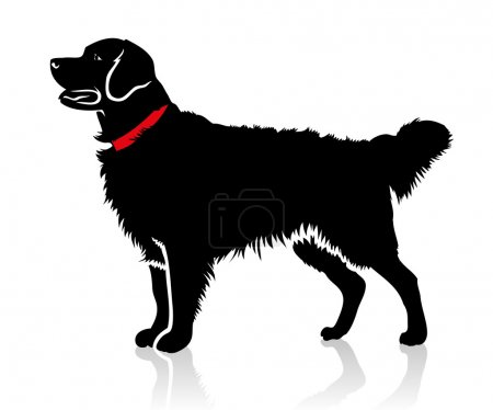 Retriever dog