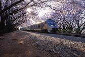 Beautiful  Jinhae  Cherry Blossom Festival in South Korea, gyeonghwayeok  train