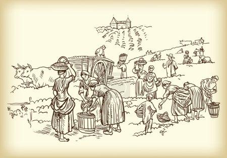 Illustration pour Illustration des vignerons travaillant - image libre de droit