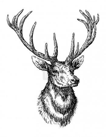 Illustration pour Croquis de cerf - image libre de droit