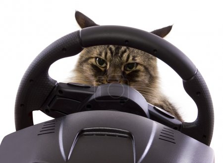 Cat driving a steering wheel