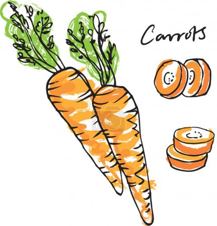 Illustration for Fresh carrots whole sliced & carrot sticks illustration isolated on white background - Royalty Free Image