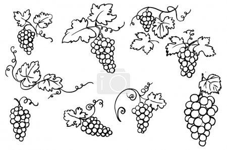 Illustration pour Ornement vecteur raisin & vigne - image libre de droit