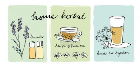 Herbal teas and essential oils, vector illustratio...