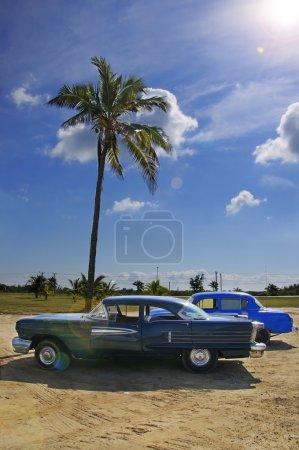 Tropical oldtimer