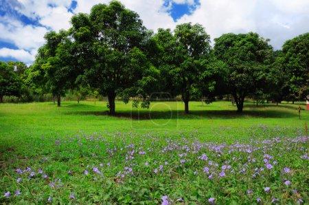 Summer trees landscape