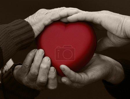 Photo pour Closeup, recadrée, isolé noir photo blanc, senior de mains, personnes âgées, femme, homme, grands-parents tenant coeur rouge. des émotions humaines, attitude. vieux santé de la population. amour, compassion, mère, père - image libre de droit