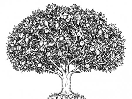 Illustration for Engraved apple tree full of ripe apples - Royalty Free Image