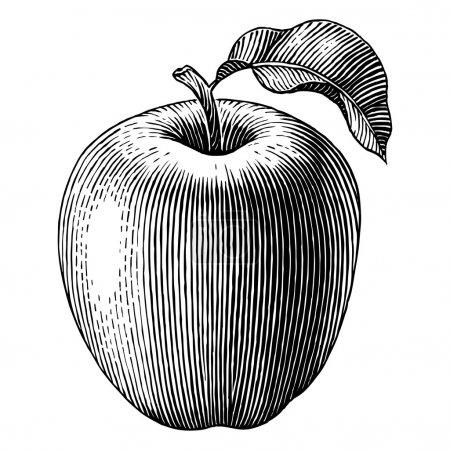 Illustration pour Illustration gravée d'une pomme. Vecteur - image libre de droit