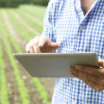 Close Up Of Farmer Using Digital Tablet On Organic...