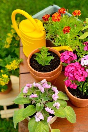 Flower pots and watering pot in green garden