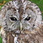 Постер, плакат: Rescued Owls and Hawks