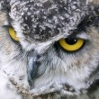 Постер, плакат: Rescued Owls and Hawks