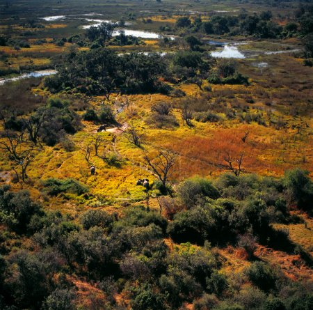 Delta Okavango landscape