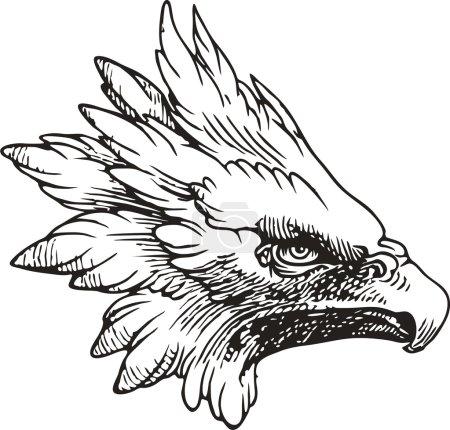 Aigle à tête blanche