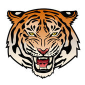 Roaring tiger's head isolated on white Color vector illustration