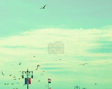 Oiseaux dans le ciel rétro