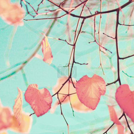 Photo for Pastel colored heart-shaped autumn leafs in a tree - Royalty Free Image