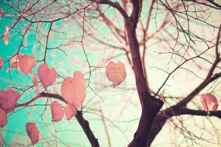 Photo pour Pastel coloré en forme de coeur automne feuilles dans un arbre - image libre de droit