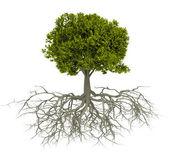 "Постер, картина, фотообои ""дерево с корнем"""