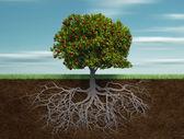 """Постер, картина, фотообои """"концептуальные дерево с яблоко и корень"""""""