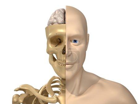 Photo pour Rendu de 3d - corps, squelette et le cerveau humain - image libre de droit