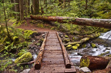 Closeup of Wooden Foot Bridge on hiking trail in m...